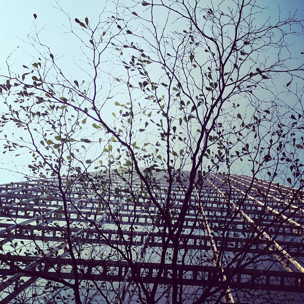 #spring has arrived in #hongkong. The leaves are beginning to sprout.