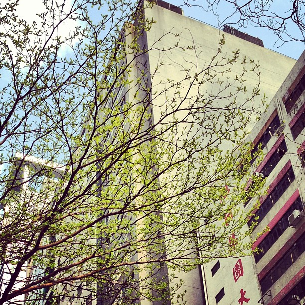 #tree #branches with budding #leaves in a #hongkong #spring. #hkig