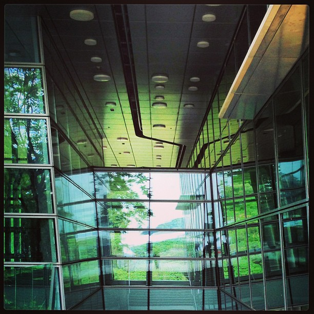 Through the #steel and #glass lie #green #trees. #hongkong #hk #hkig