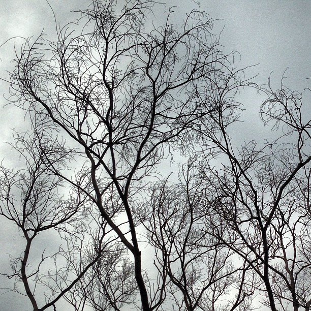 #dead #tree #branches reach to the sky. #hongkong #hk #hkig #patterns