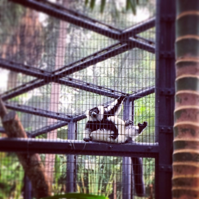 A mini #zoo, set right in the heart of #central, #hongkong island. #hk #hkig