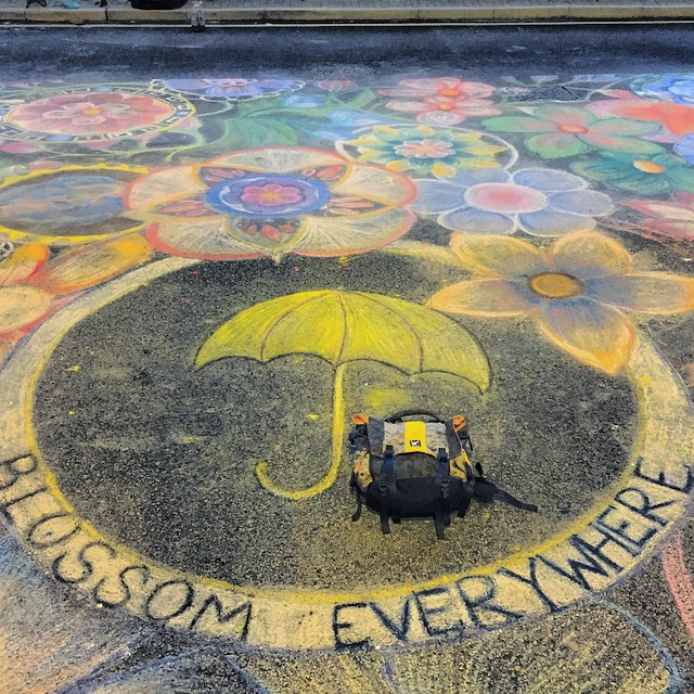 Blossom Everywhere - a large piece of #chalk #art at the #OccupyHK protest site on #HarcourtRoad, #Admiralty. I watched as two girls drew it out. For scale, that's my @greenroom136 backpack under the #umbrella. #HongKong #hk #hkig