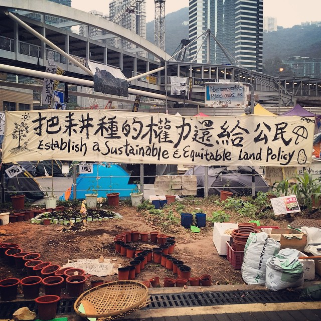 The #OccupyHK #Admiralty #garden / #farm. The protesters appropriated a parcel of land that was previously sidewalk greenery and turned it into a #guerrillagardening farm. Will they harvest the crops before tomorrow's clearout? #HongKong #hk #hkig