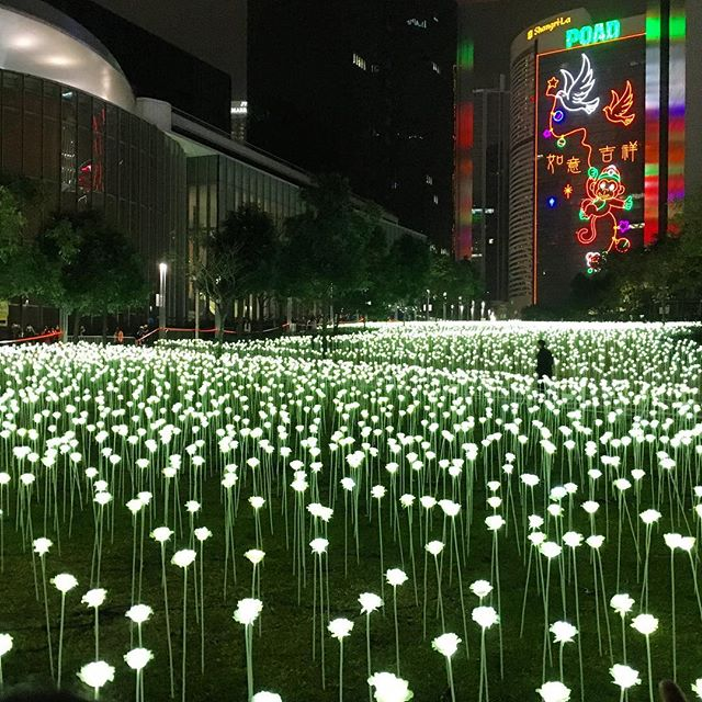 Another view of #LightRoseGarden at #TamarPark in #Admiralty. #LED #roses for the #LanternFestival. #HongKong #hk #hkig