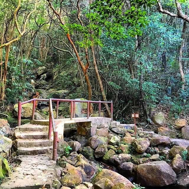 An old #StoneBridge along Section 3 of the #HongKongTrail. #hiking #hk #hkig #hongkong #trail