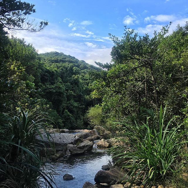 Scenery while #hiking along Section 6 of the #HongKong #trail. This section runs thru the #TaiTam reservoir area. #hk #hkig #HongKongTrail
