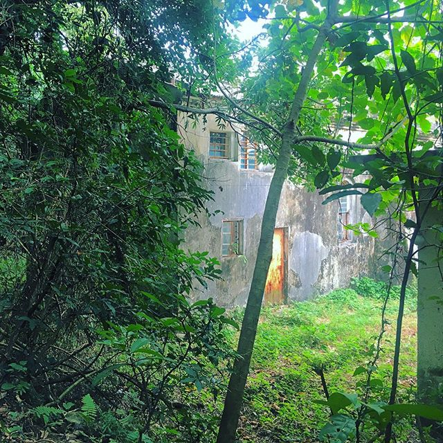 The #forest reclaims an #abandoned #village #house. #hiking the #MacLehose #Trail takes you through several of them. #hongkong #hk #hkig #villagehouse #MacLehoseTrail