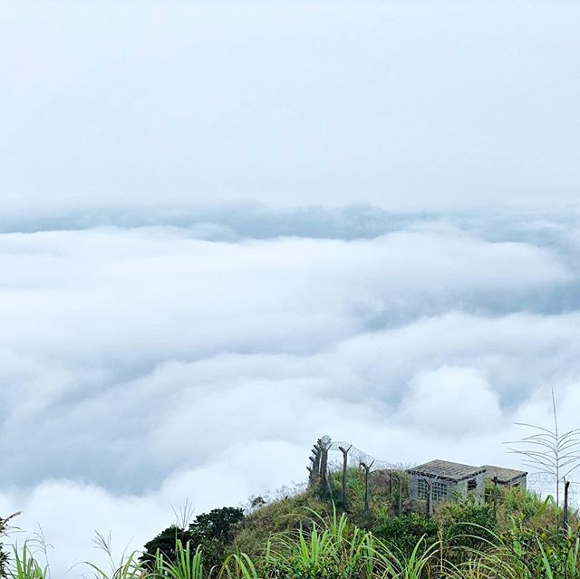 #hiking up #TaiMoShan on #CheungYeung. The #clouds are so low today that you're walking above them. #seaofclouds #hk #hkig #hongkong