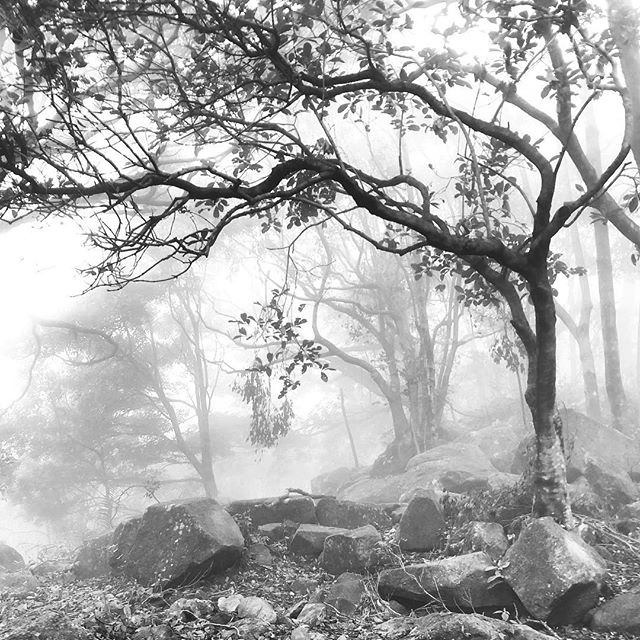 On the way to #TaiMoShan on #CheungYeung, the forest is beautifully #misty. #mono #hk #hkig #hongkong #hiking